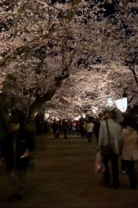 弘前公園の夜桜