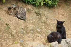 大徳寺の猫