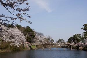 高田公園の桜 (5)