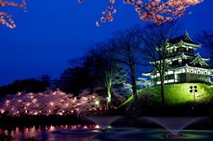 高田公園の桜 (7)