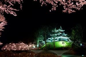 高田公園の桜 (8)