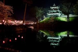 高田公園の桜 (9)